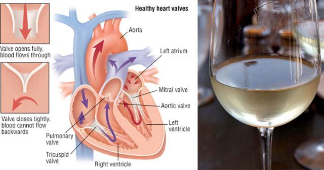 Rượu vang ngăn ngừa bệnh tim mạch