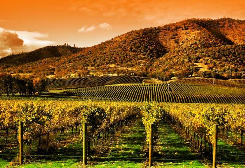 Lịch sử phát triển Rượu vang Mỹ